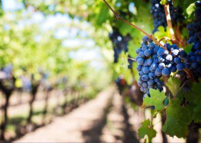 Tanzanite-wines-2019